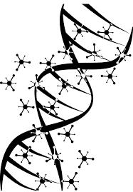 Проверка ДНК на родство