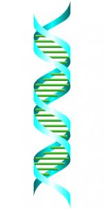 Проверка ДНК отцовство