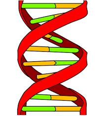 Сдать анализы на генетику в Москве