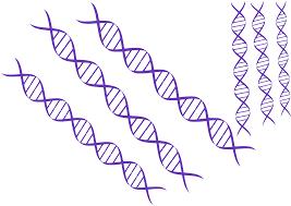 Сдать анализы на ДНК