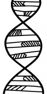 Сделать анализ ДНК по волосам