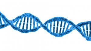 Определение отцовства через ДНК в Москве