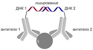 Сделать ДНК анализ