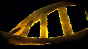 Определение отцовства методом ДНК-диагностики