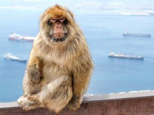 ДНК тест для животного в Москве стоимость
