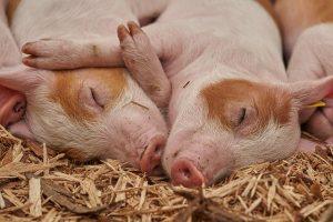 Генетическая экспертиза на родство животных цена