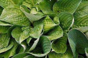 Объекты ботанической экспертизы
