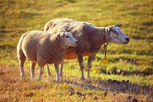 Генетическая экспертиза отцовства животного