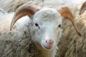 Экспертиза установление отцовства животного